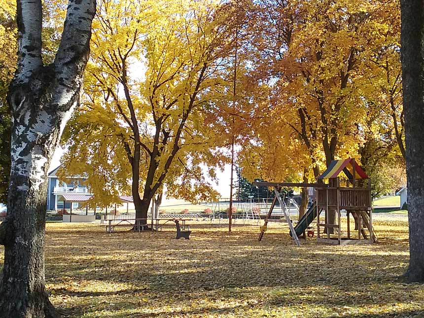 Park trees in the fall