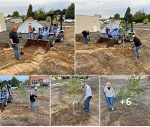grading and planting trees on the Harrington Town Square site